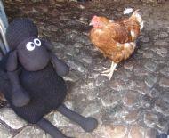 Hello, hen!
