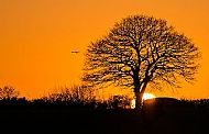Sunset at Oakley park