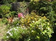 Our Scottish Cottage Garden