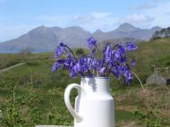 Order 1 to 5 packets of Eddie's Eigg Croft Wild Bluebell seeds