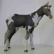 Coloured Foal