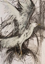 Movement In Flight - The Gull Collection I