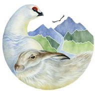 Alba Ecology Ltd Logo
