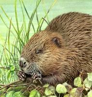 Beaver (Royal Mail)