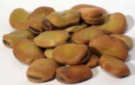 1 oz Mojo Wish Beans (Vicia faba)