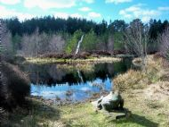 Pond, Ferry Wood Walk, Lairg