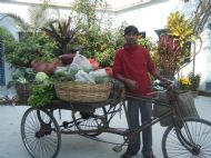 Vegetable delivery each day