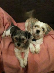 Bobby & Trixie