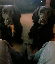 Bella & Murphy