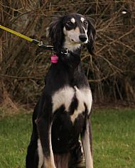 New dog listed for rescue at the KWK9 Rescue - Mimi