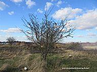 clootie/wishing tree
