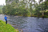novar fishings, river alness, beat 6, juniper thumbnail