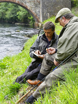 novar fishings, river alness, trout and salmon feature