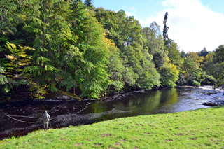 novar fishings, river alness, beat 5 crag pool