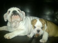 Torro with little brother Zulu