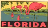 Florida, Flamingos