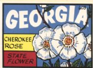 Cherokee Rose, State Flower