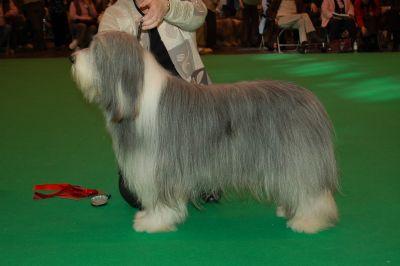 miller wins mid limit dog - crufts 2007