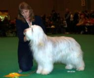 At Crufts 2007