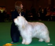 Honey at Crufts 2007