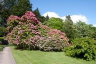 Spring in the gardens at Armadale Castle