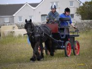 badger orkney carriage driving show
