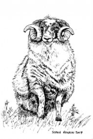The Old Ram