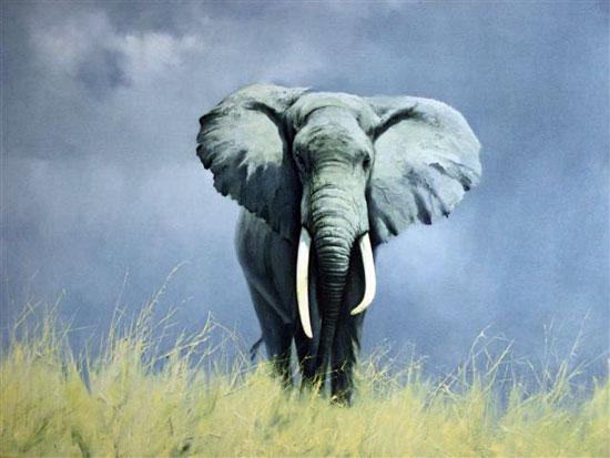 wise old elephant, by david shepherd