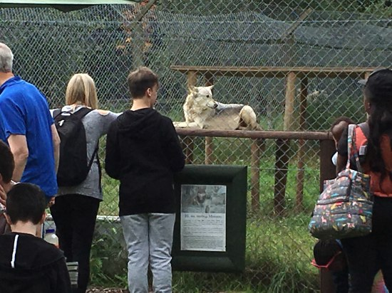 pdc-uk visits uk wolf conservation trust