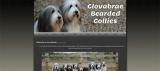 clovabrae bearded collies