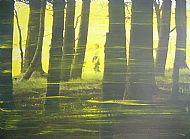 Like Fairytales No.3, acrylic on photograph, 55x41 cm