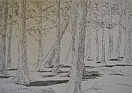 Trees, graphite on tracing paper, 61hx64w cm