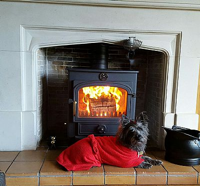 dog sitting by fire side
