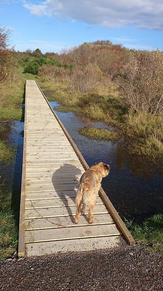 ardersier common new boardwalks
