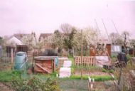 overall view of allotment