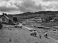 Glenuig 1954 (before the road)