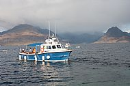 Bella Jane wildlife cruises at Elgol
