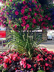 Large octagonal planter in Market Square -- 16 August 2016. Photo by Julie Lomax.