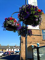 Hanging baskets in Market Square -- 18 July 2017. Photo by Julie Lomax.