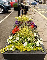 Market Square planter -- 05 July 2019. Photo by Martin Sim.