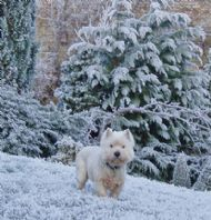 A frolic in the frost