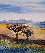 Moorland Hawthorns