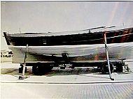 White Wing 5