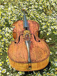 Cello on the machair