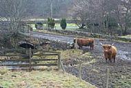 Douglas mill bridge