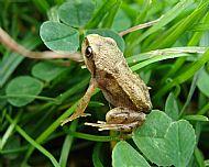 Little Frog, Stablelake.