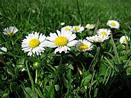 Daisy chains...