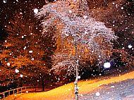 Night-time snow