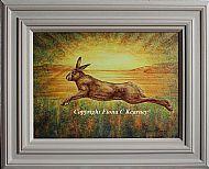 Sunrise Hare