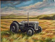 Grey Fergie,  Boath, Ross-Shire